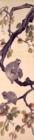 渋柿に猿図